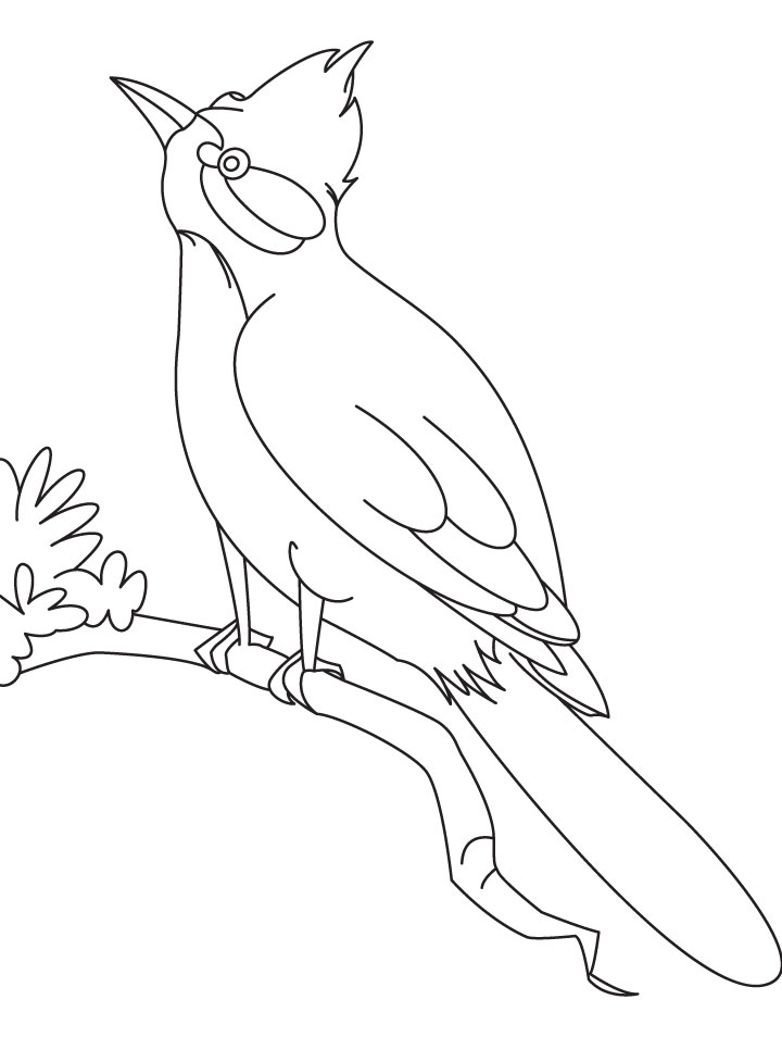A nightingale bird watching coloring page Download Free