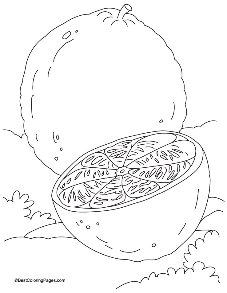 Orange Coloring Page - AZ Coloring Pages