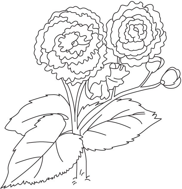 Pair of blossoms coloring page