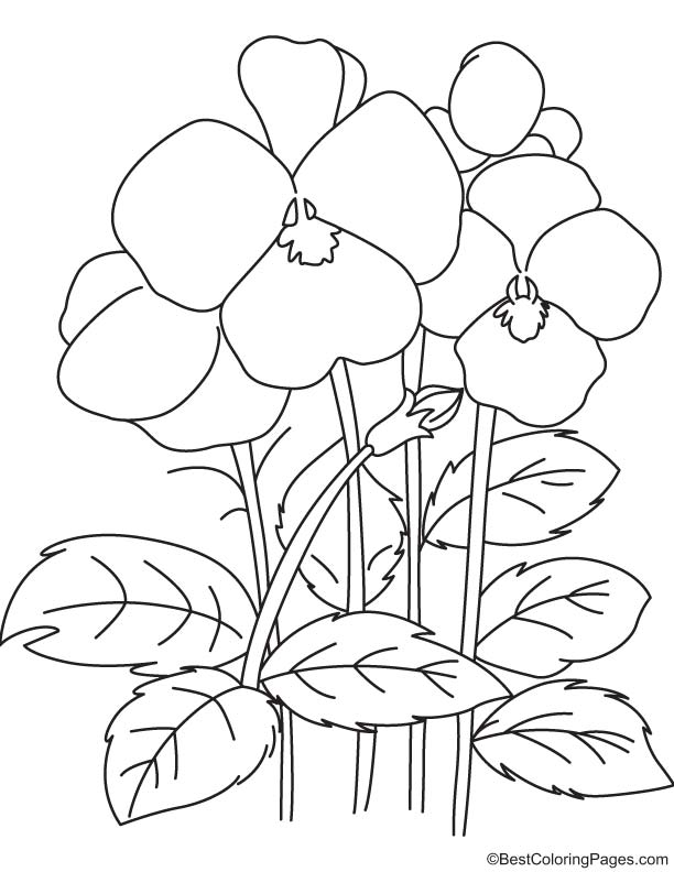 Pansy flowers coloring page Download