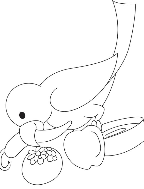 Parrot eating chili coloring page