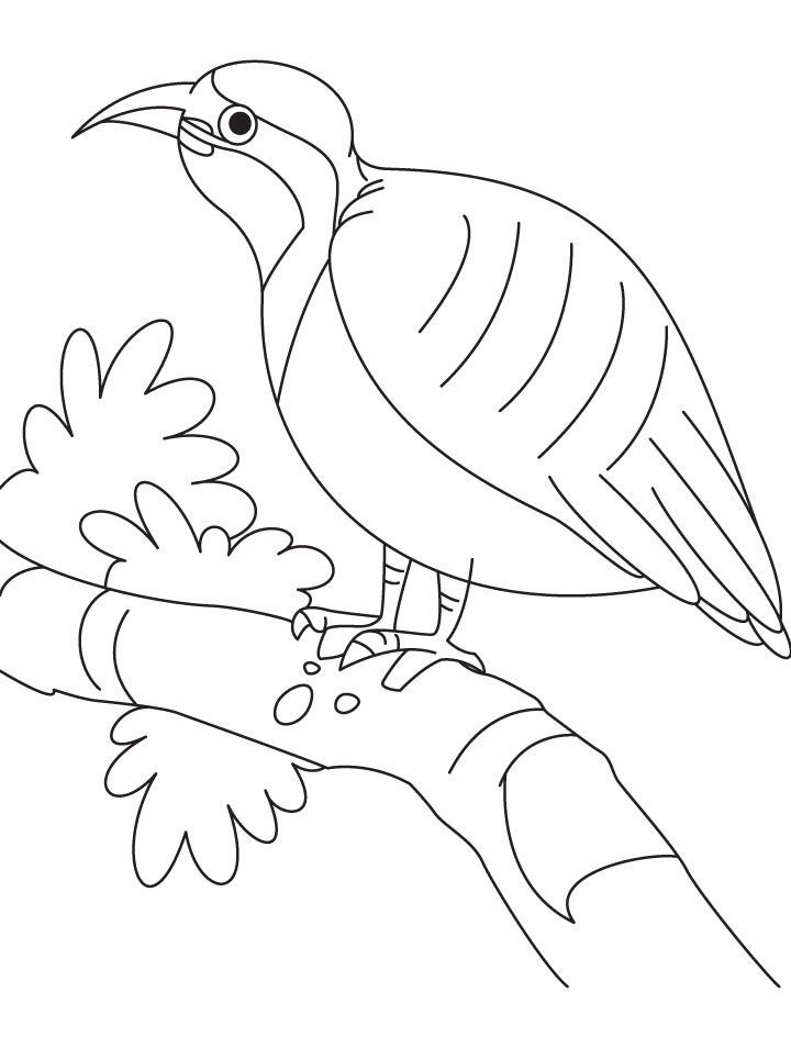 Resting Beautiful Partridge Coloring Page