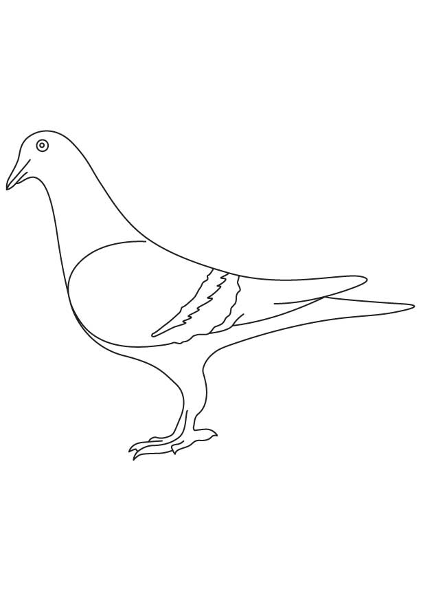 Pigeon coloring sheet  Download Free Pigeon coloring sheet for