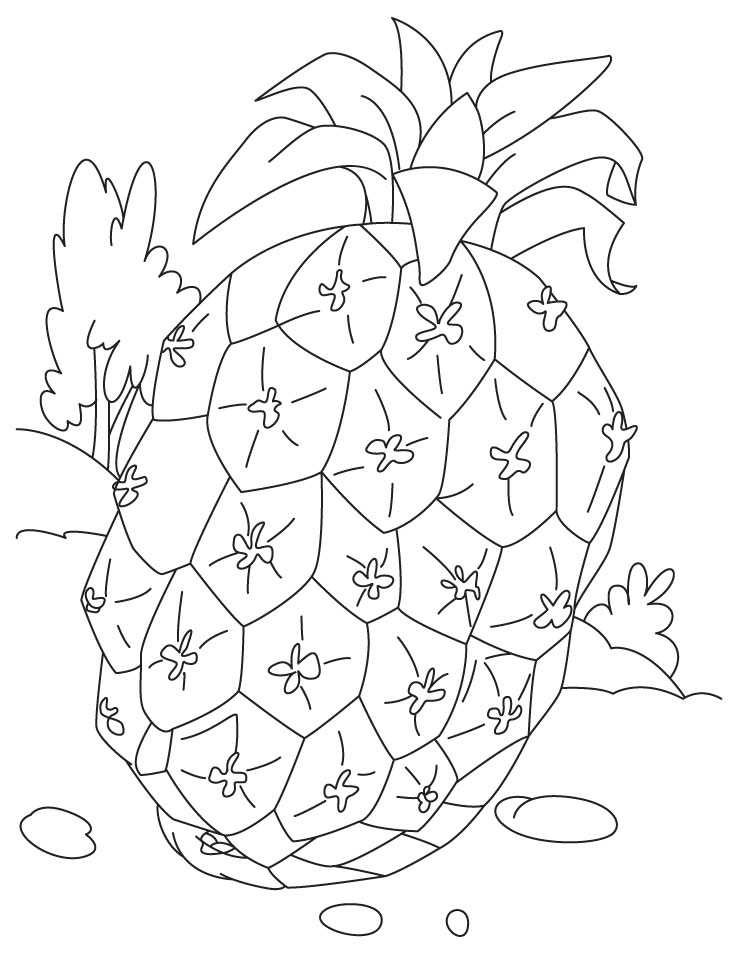 Pineapple Fruit Coloring Pages