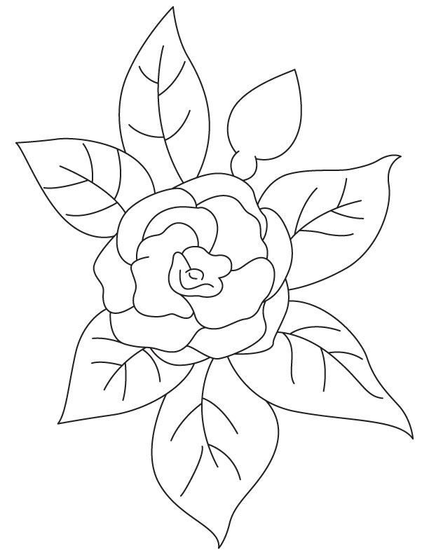 Camellia Flower Line Drawing : Draw a camellia coloring pages