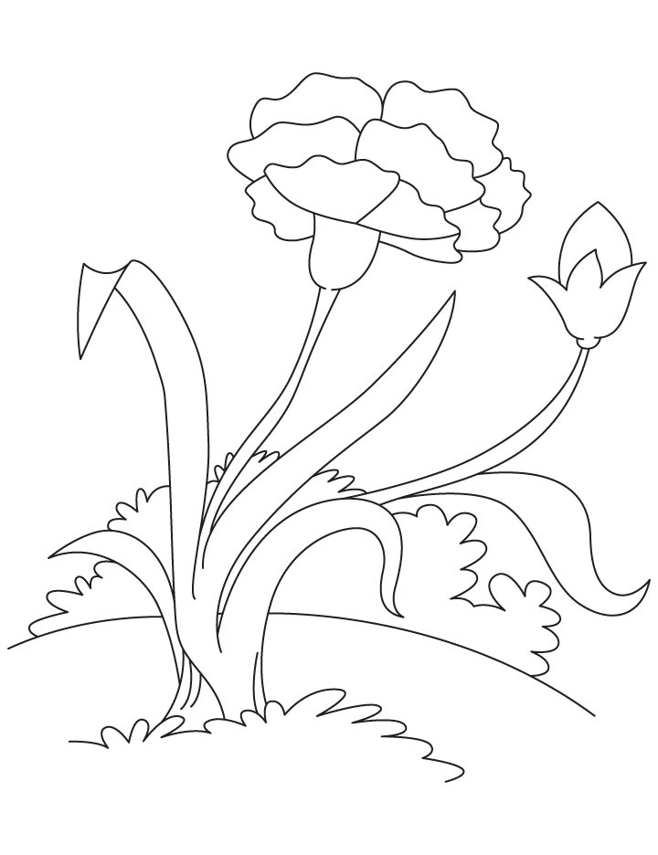 Pink carnation coloring page