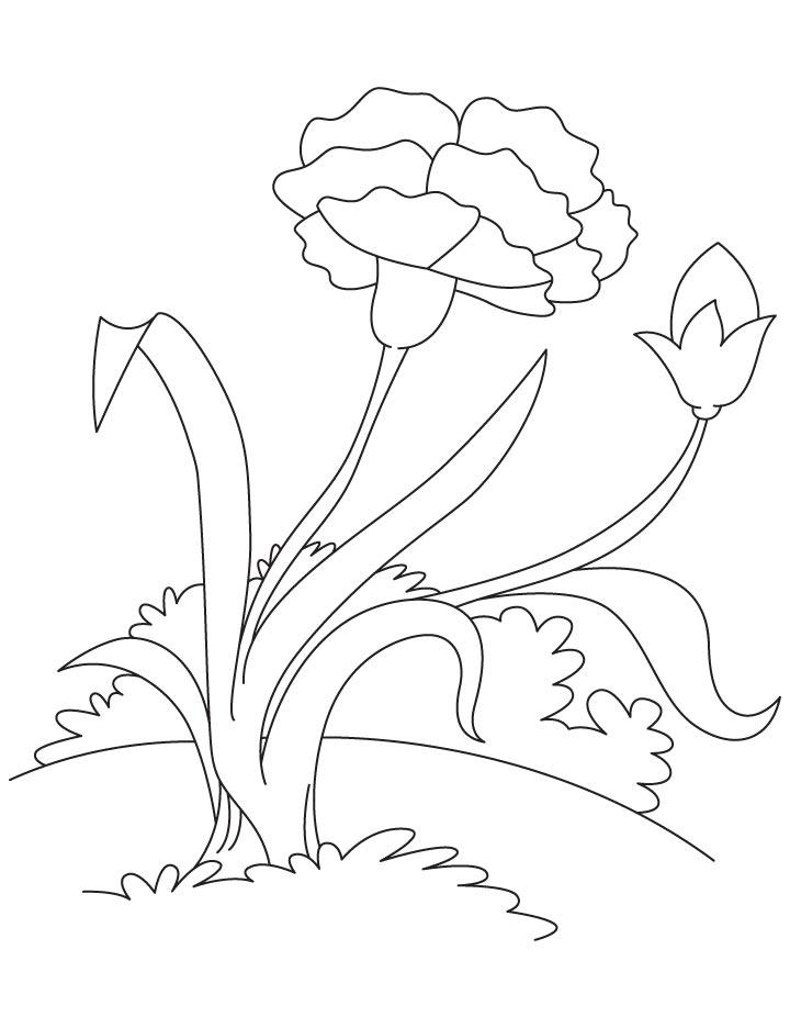Pink carnation coloring page Download Free Pink carnation coloring