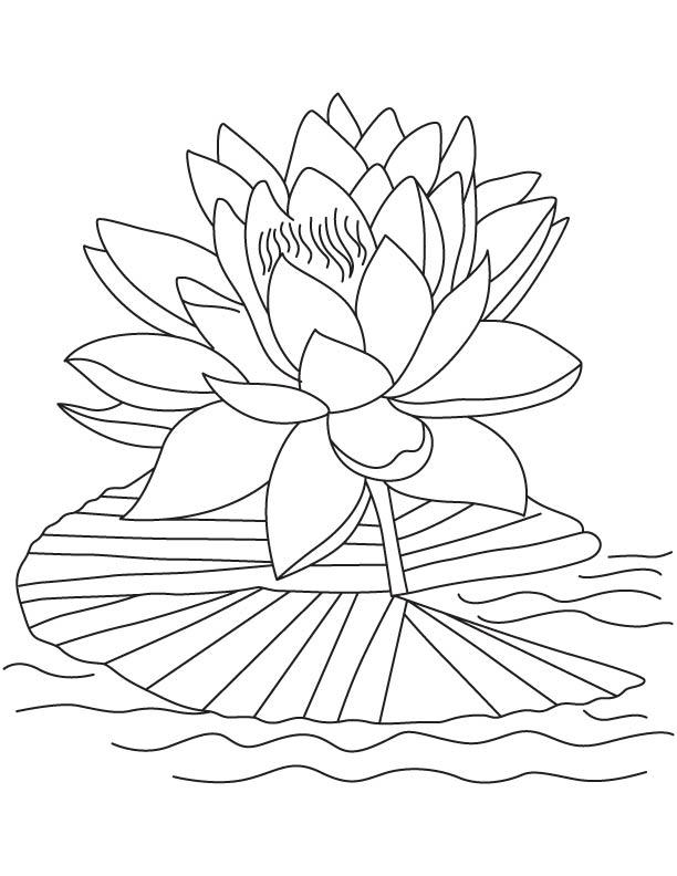 Pink lotus coloring page | Download Free Pink lotus coloring page ...