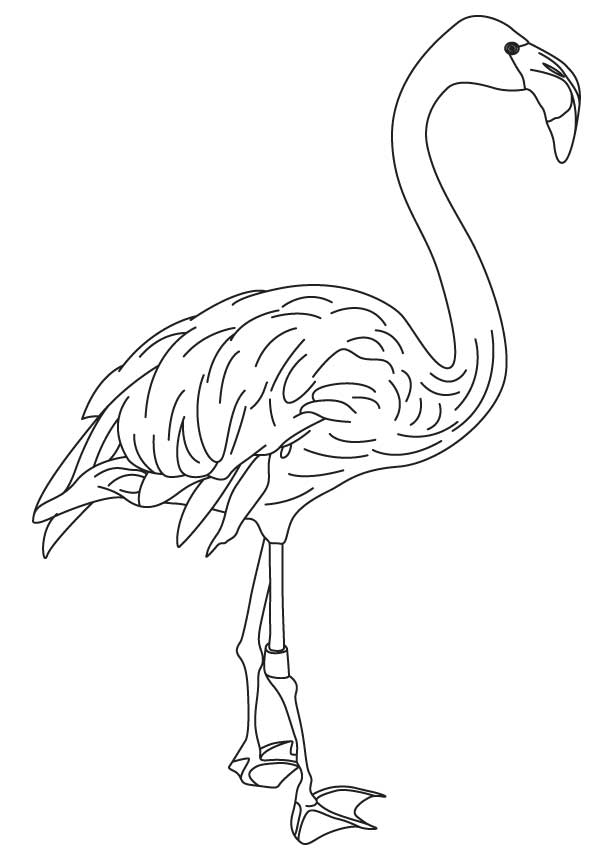 Pink wing feathers bird coloring page Download Free Pink wing