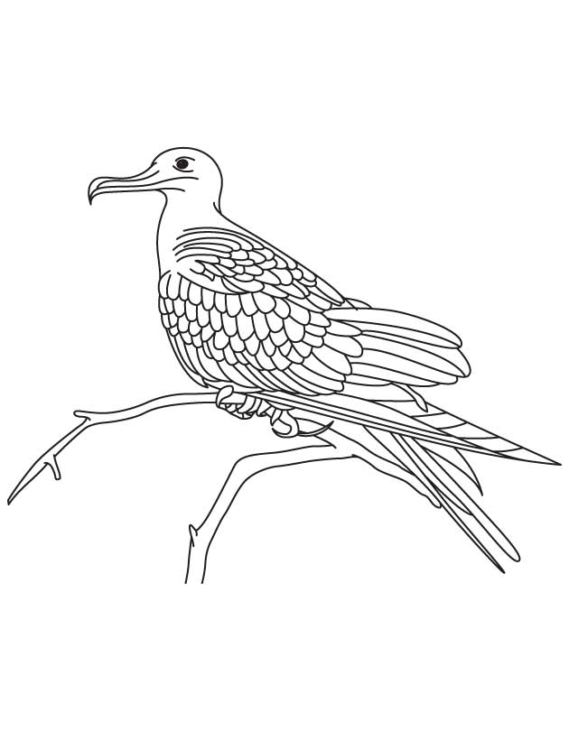Pirate bird coloring page