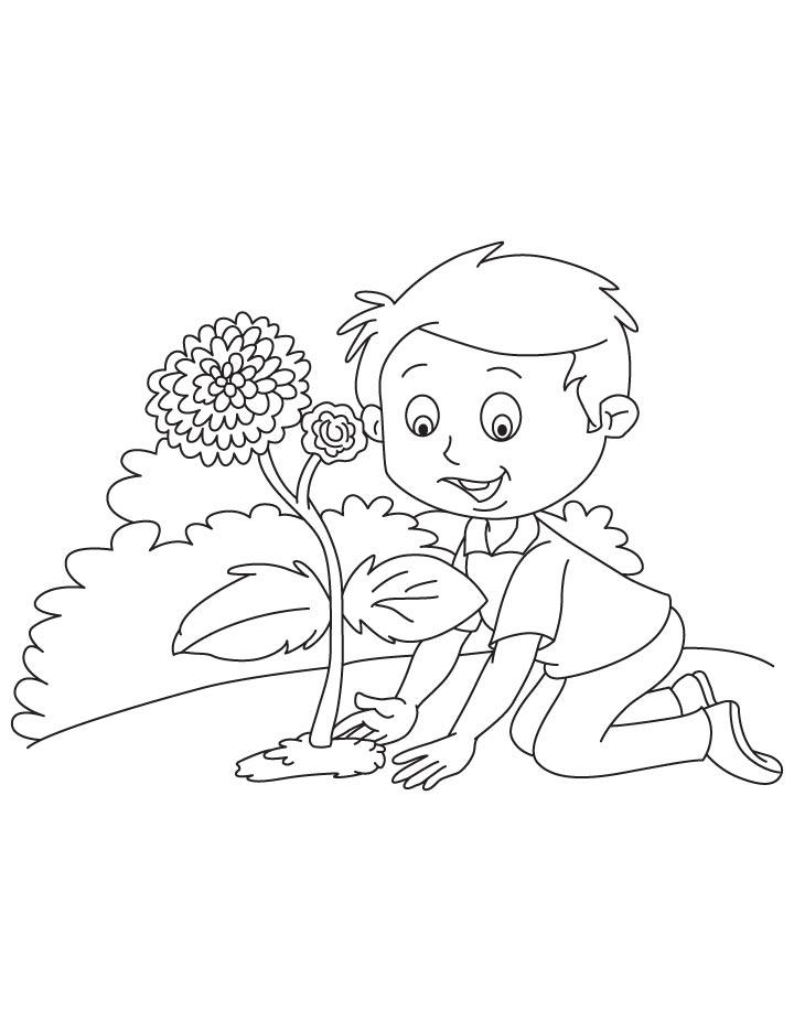 Planting Chrysanthemum Coloring Page Download Free Chrysanthemum Coloring Page
