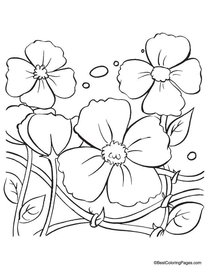Draw A Poppy Coloring Pages Poppy Colouring Pages