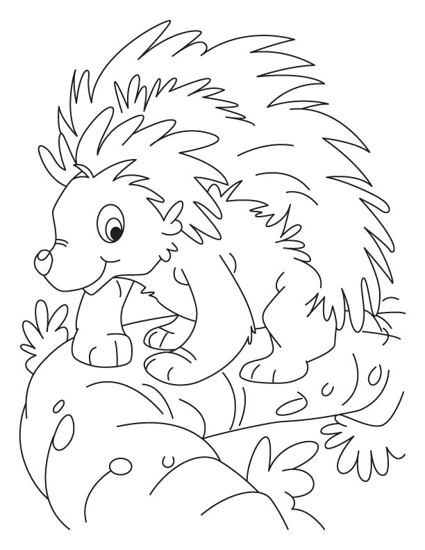 Balancing porcupine coloring pages