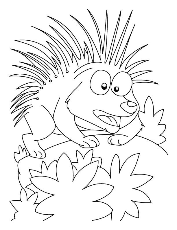 Charmant Porcupine In Attacking Mood Coloring Pages