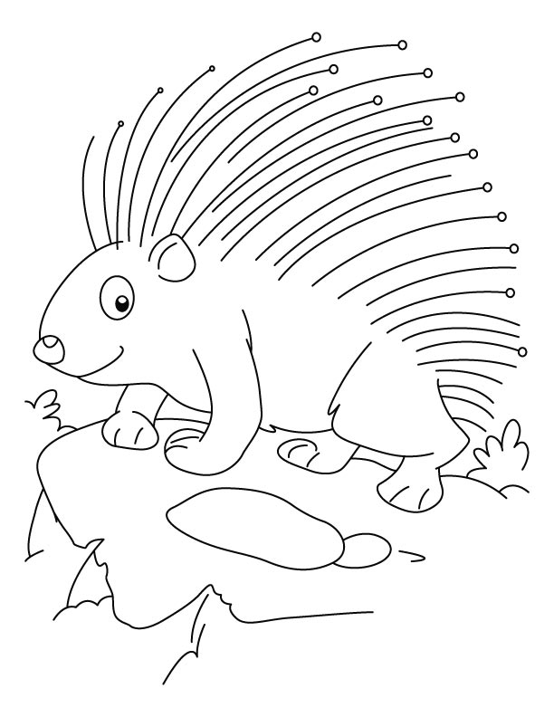 Attirant Threatened Porcupine Coloring Pages