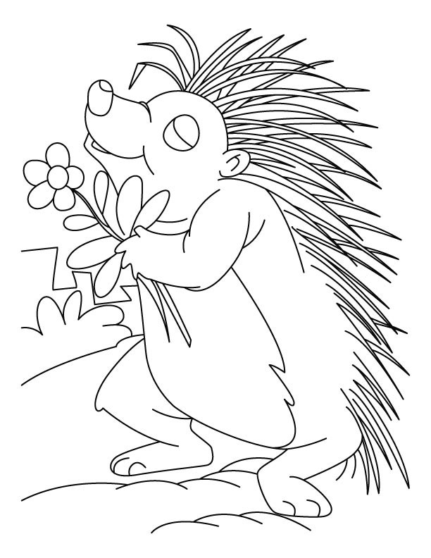 Flower loving porcupine coloring pages