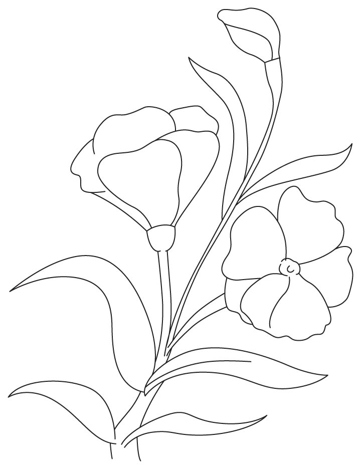 Purple carnation coloring page