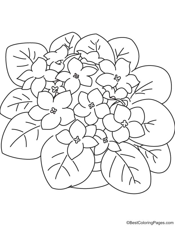 Purple violet coloring page download free purple violet for Violet coloring page