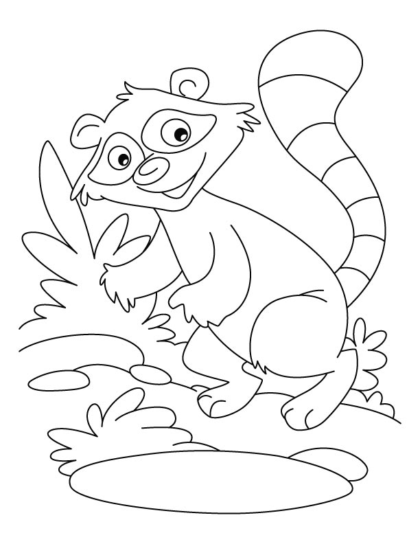 Raccoon a washer dog coloring pages