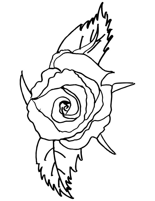 Red rose coloring pages coloring pages for Red coloring pages