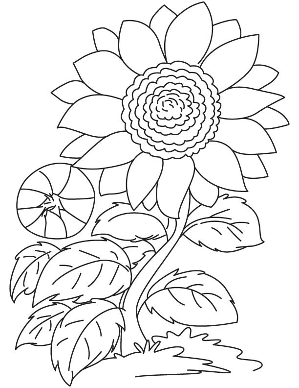 Red Sunflower Coloring Page