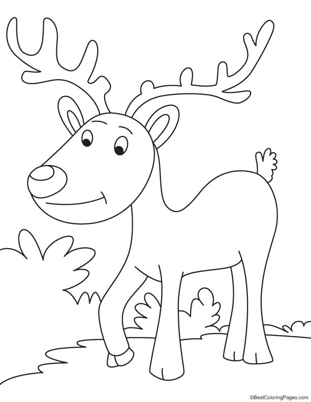 Reindeer on evening walk coloring page