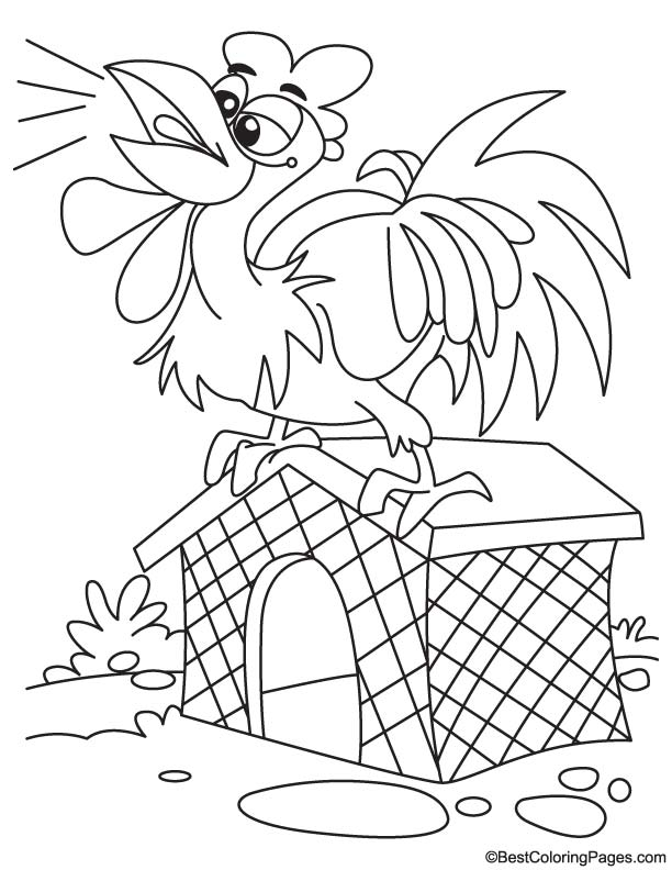 Rooster calling coloring page