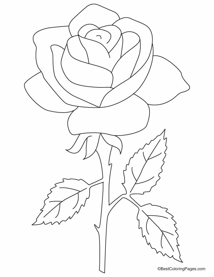 big coloring page rose the