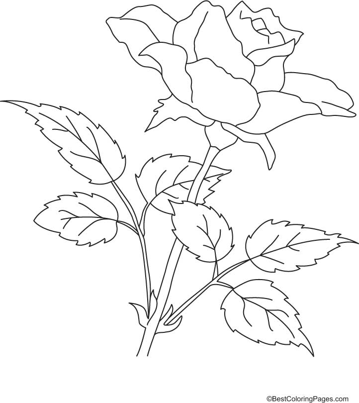 Rose With Petals Coloring Page