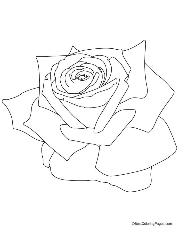 Pink Rose Coloring Page