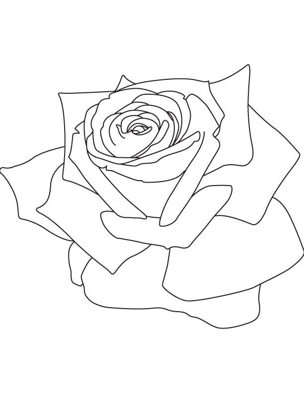 Rose petals coloring page Download