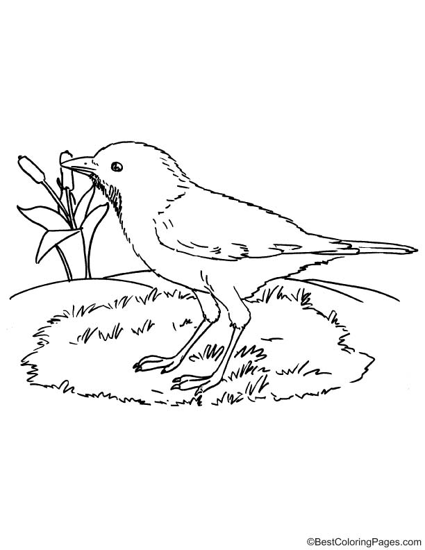 Rufous bellied thrush coloring page