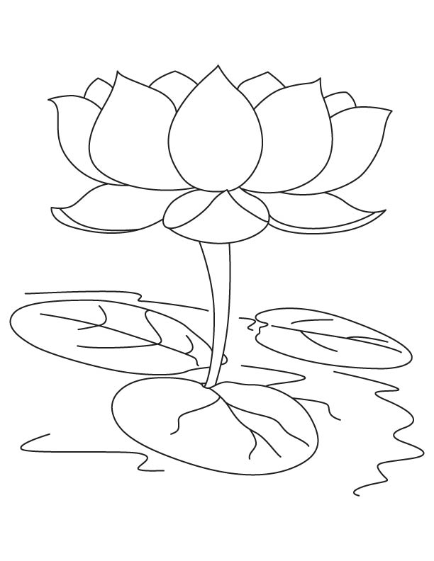 Sacred Lotus Coloring Page Download Free Sacred Lotus Coloring Page For Kids Best Coloring Pages