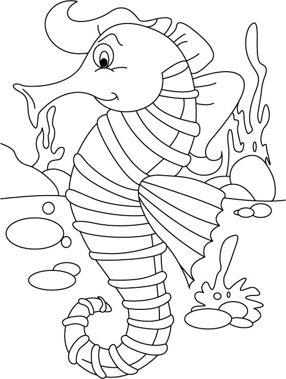 Seahorse orderingno back biting coloring pages  Download Free