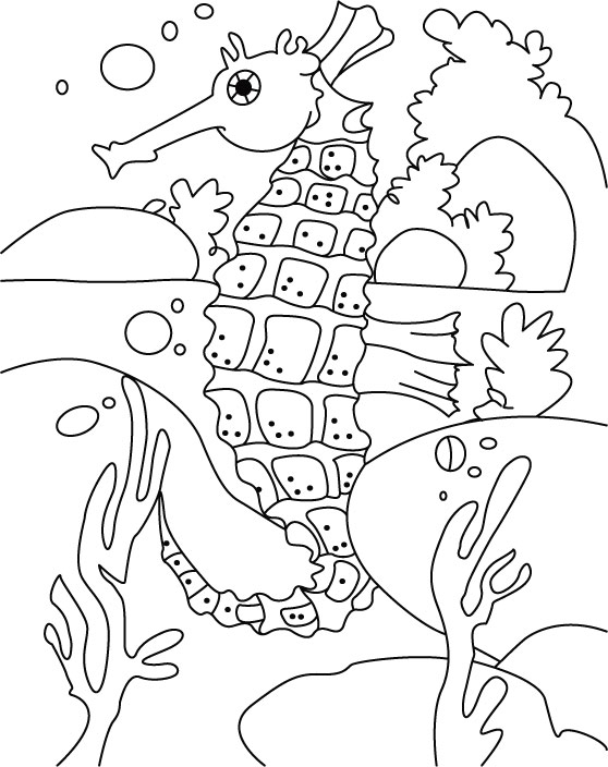 Box seahorse coloring pages