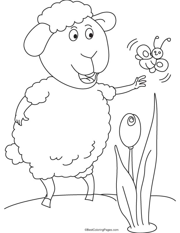 Sheep and butterfly coloring page