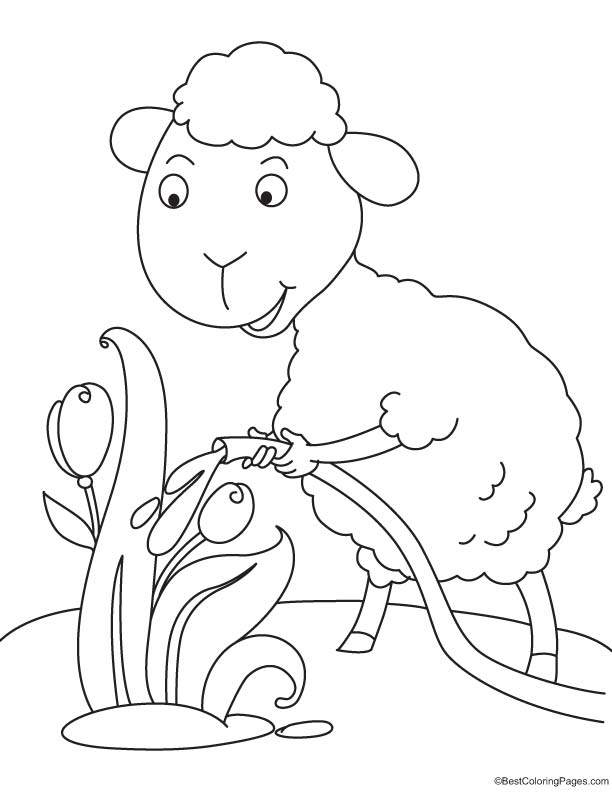 Sheep watering the tulip coloring page