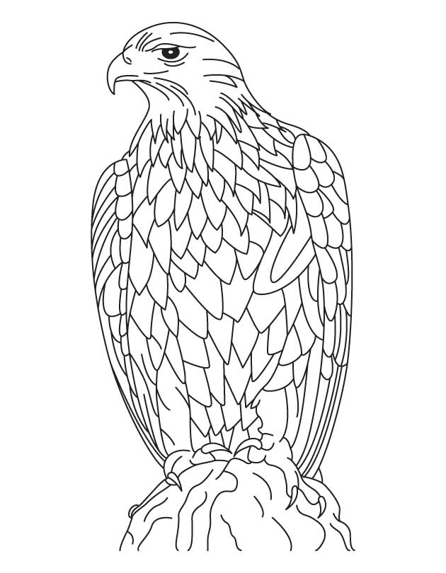 Silent Golden Eagle Coloring Page