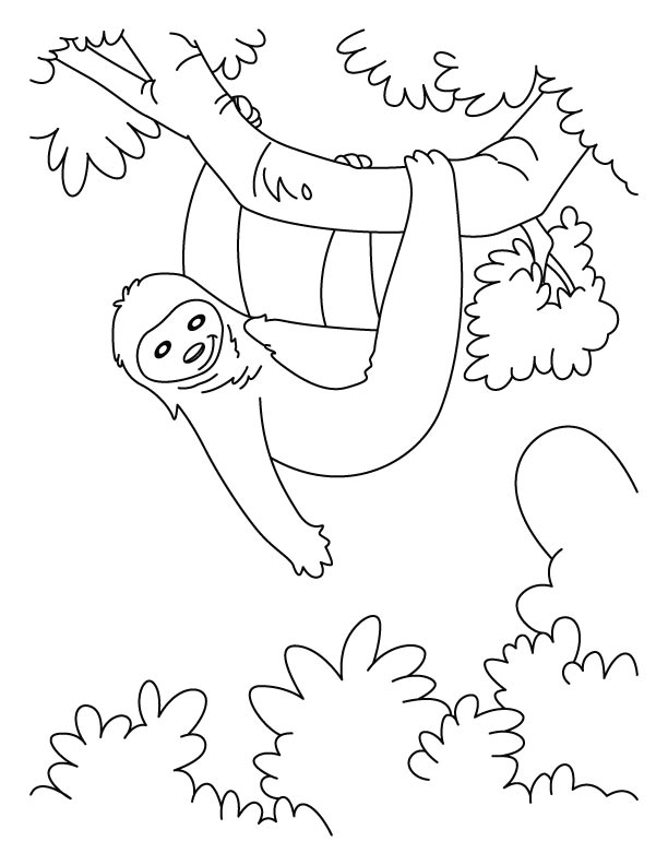 Hanging Sloth Coloring Pages Download Free Hanging Sloth