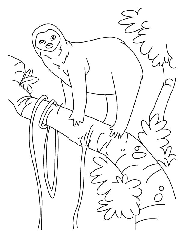 Sloth a slowest animal on Earth coloring pages