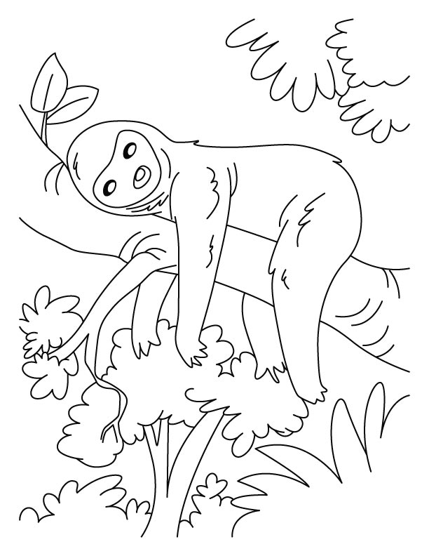 sloth coloring book coloring pages Cute Sloth Coloring Pages  Printable Sloth Coloring Pages