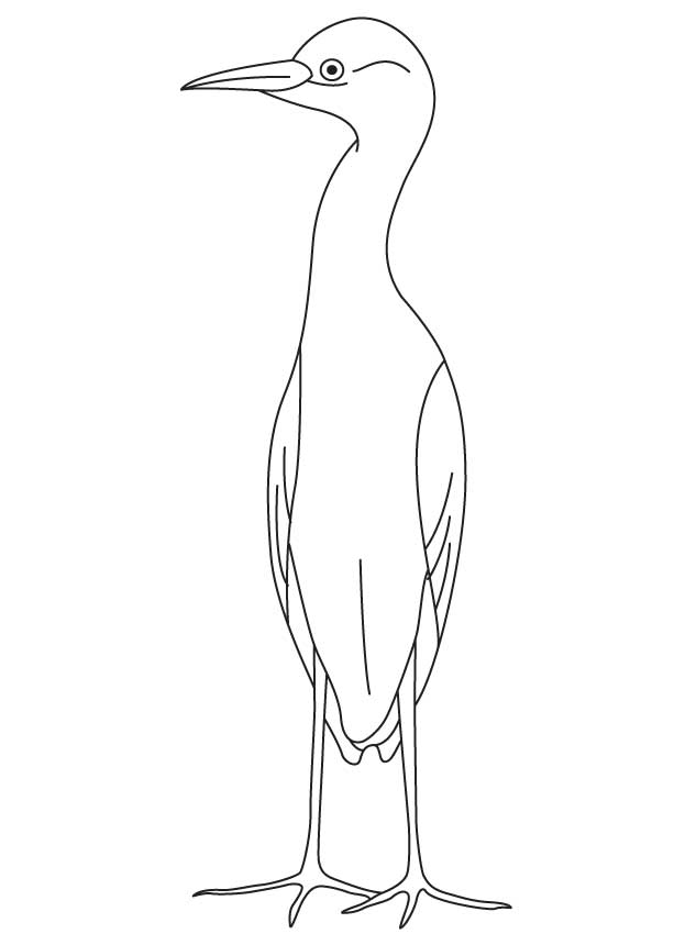 small egret coloring page