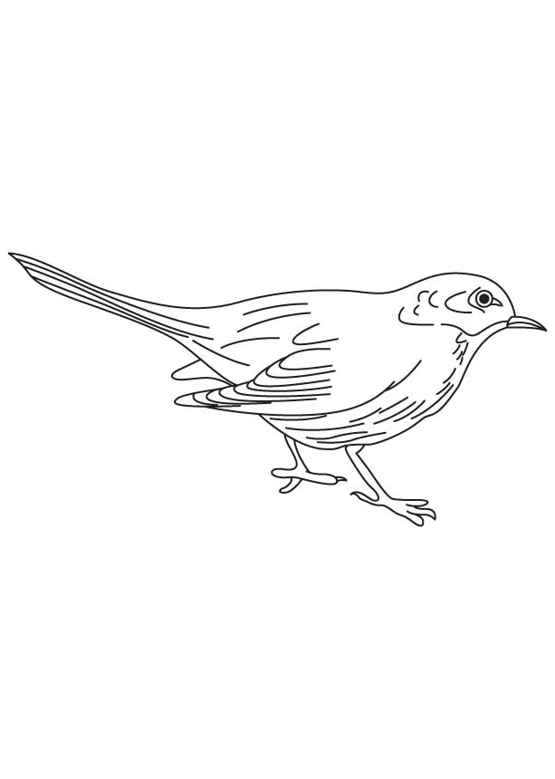 red winged blackbird coloring pages - photo#11