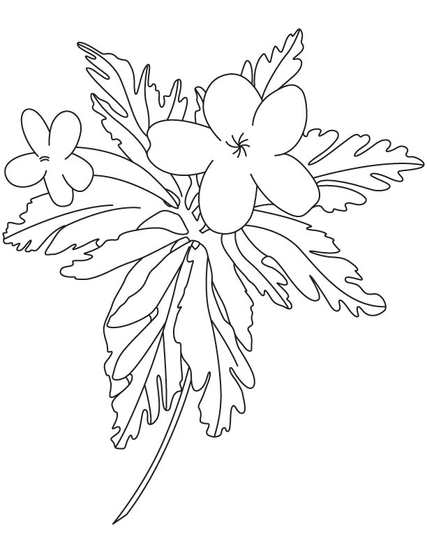 Small buttercup coloring page