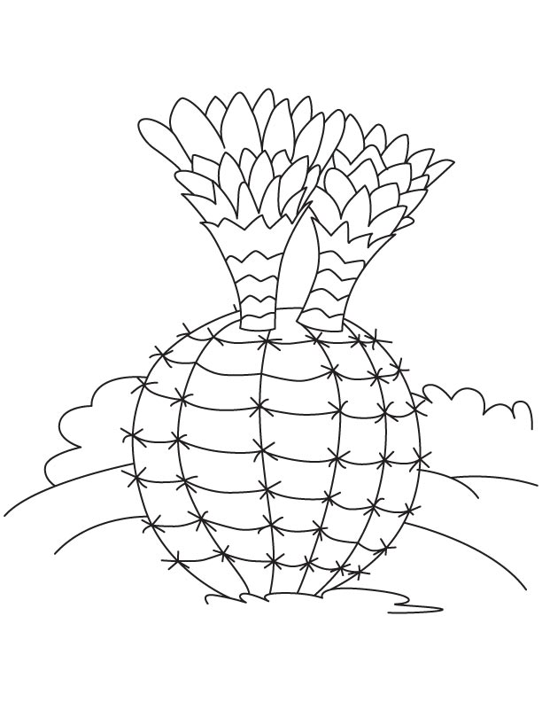cactus coloring pages plants - photo#18