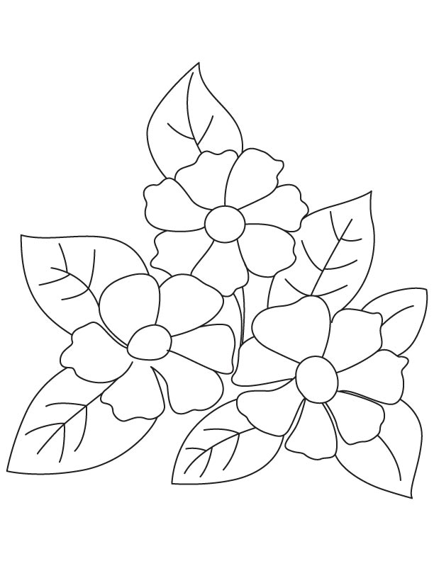 Coloring Pages Of Small Flowers Camellia Page For Kids Best