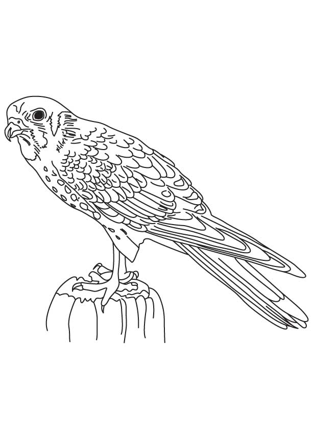 falcon coloring pages - photo#11