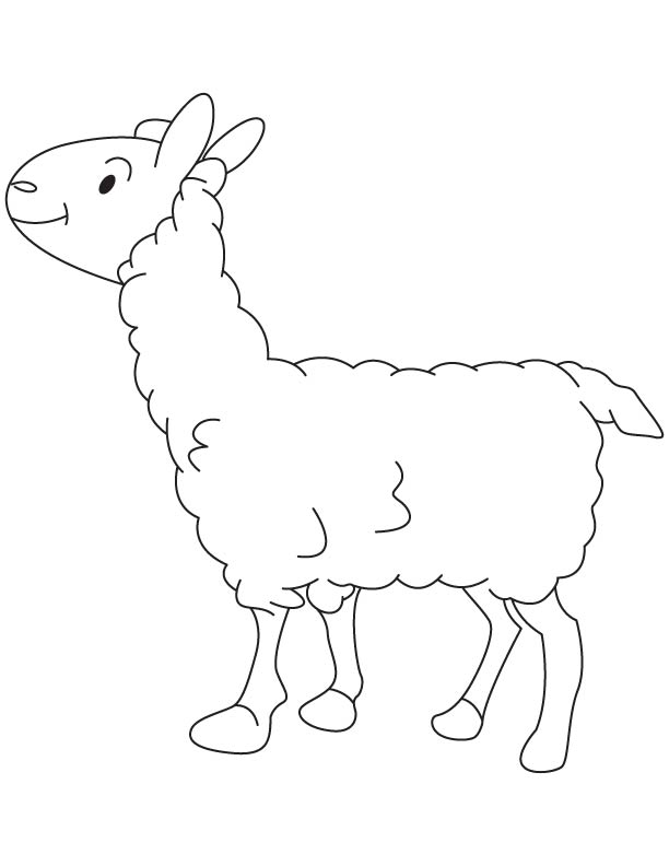 Small lamb coloring page