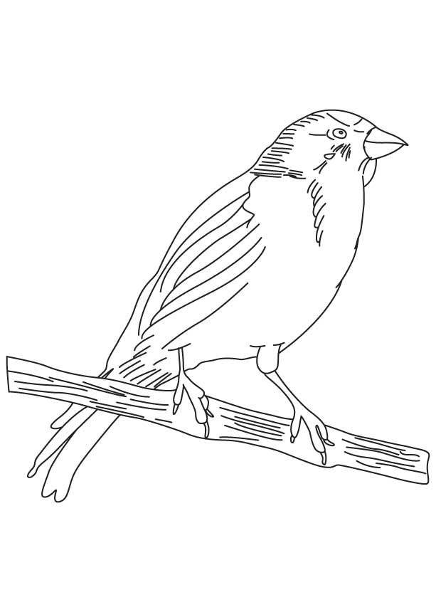 Small Songbird Coloring Page