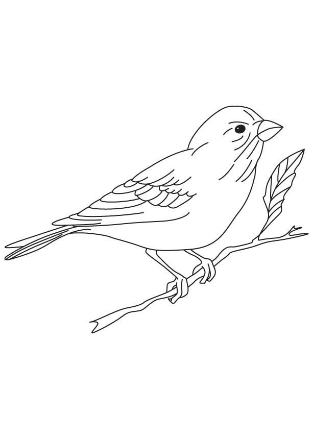 79 Birds Of Prey Coloring Book